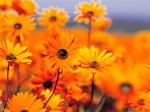 گل و نوروز